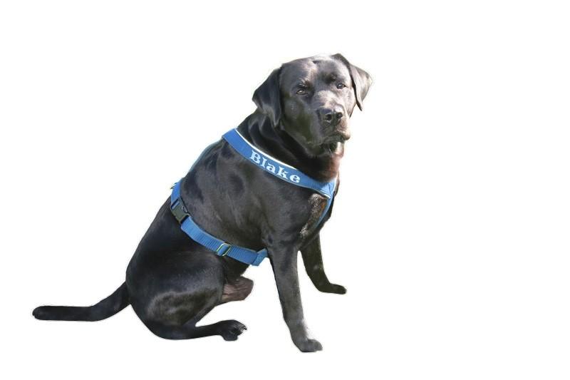 saardogs-führgeschirr-blau-silber-labrador