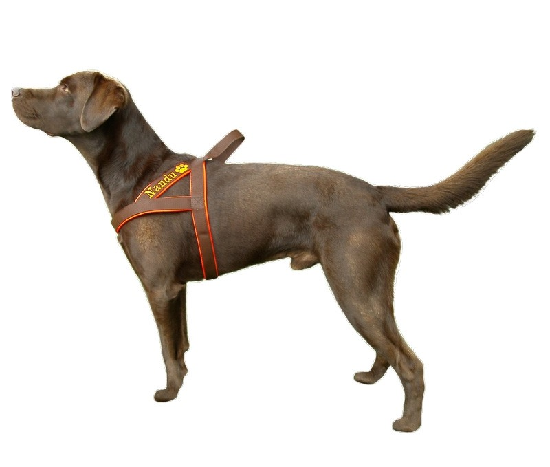 saardogs-norweger-geschirr-braun-orange-labrador
